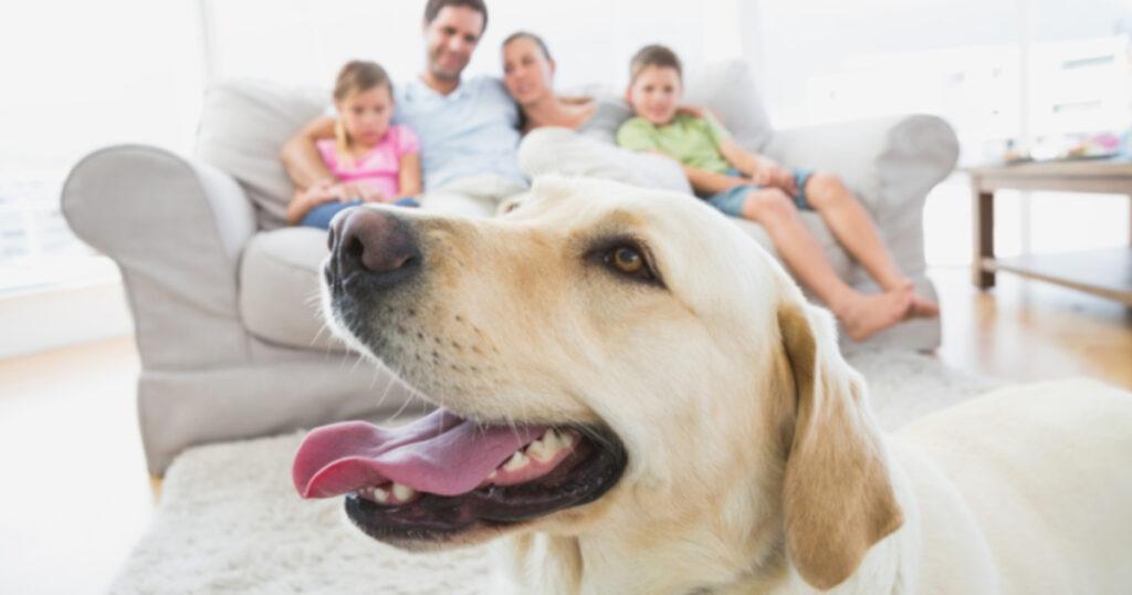 Практические советы по созданию дома, благоприятного для собак