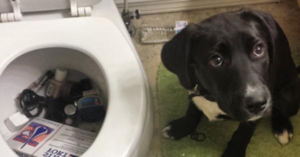 Четыре вещи, которые поймут только люди с собаками-спасателями