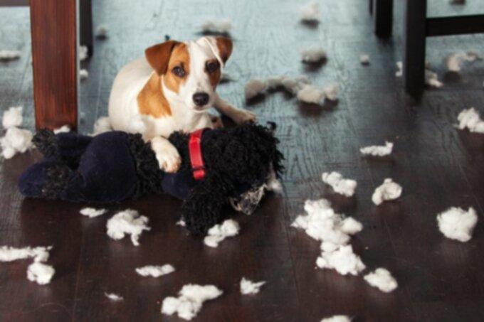 Разрушительное жевание и копание собак