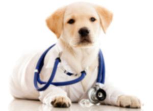 VetPronto: новый способ посещения ветеринара для вашей собаки