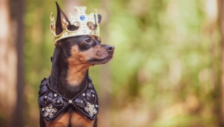 4 невероятно высоких должности собак