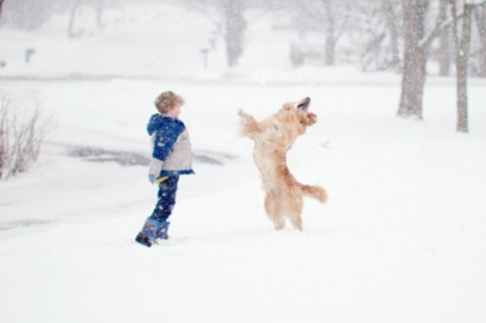 Берегите собак во время метели