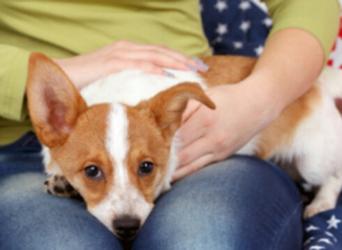Могут ли собаки читать ваши эмоции?