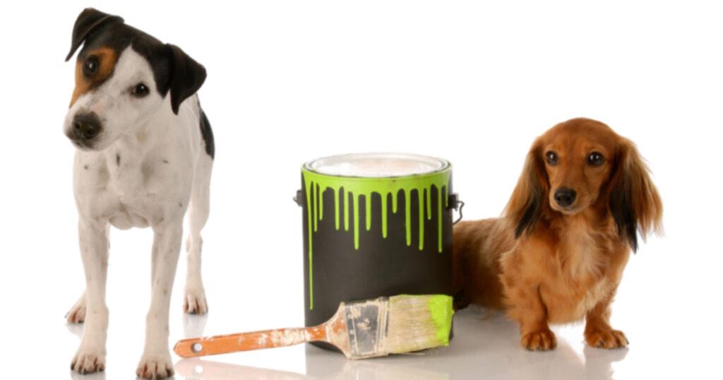 Собака берется за рисование, работы продаются в Интернете