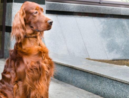 Неделя предотвращения отравления: убийство на выставке собак в Крафтс и 5 вещей, токсичных для вашей собаки