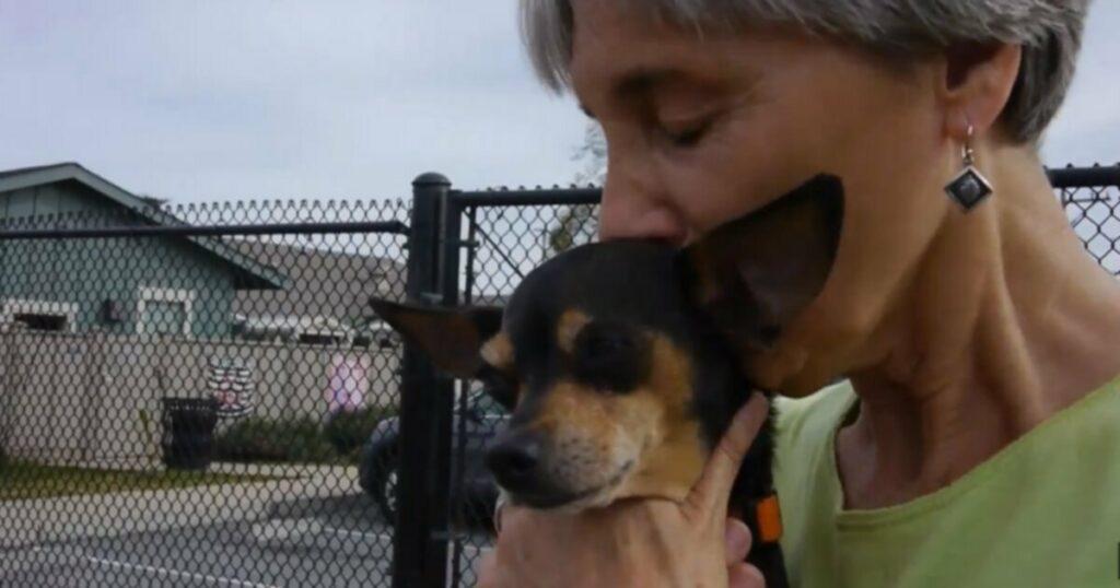 Собака, брошенная из движущейся машины, находит дом навсегда