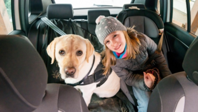Ремни безопасности для собак?