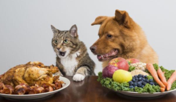 Здорово ли быть вегетарианцем для кошек и собак?