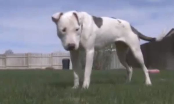 Theia: Собака-зомби чувствует себя хорошо после того, как ее похоронили заживо