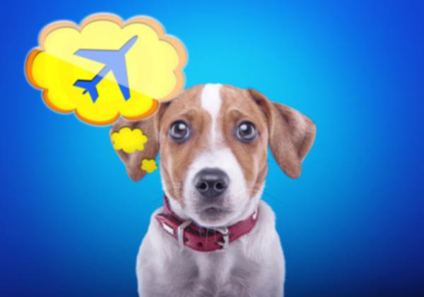 Как спланировать безопасный и разумный международный переезд с собаками