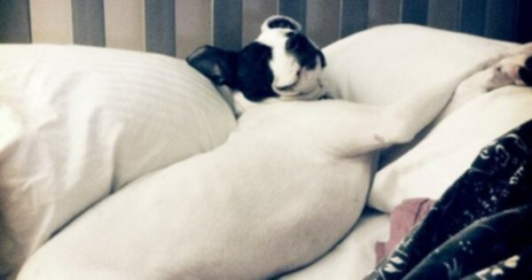Щенок, найденный брошенным в ведре, чувствует себя хорошо благодаря помощнику собаки