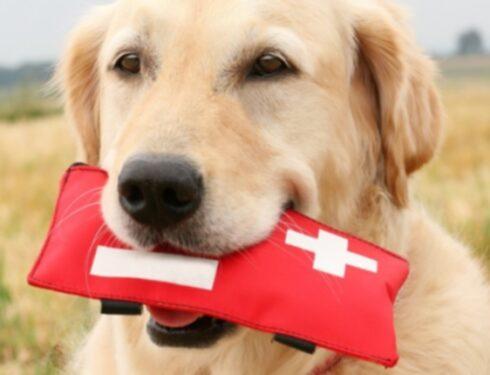 13 основных предметов, которые нужно иметь в аптечке вашей собаки