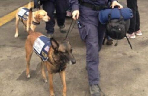 12 собак из группы реагирования на стихийные бедствия (DART) прибыли в Непал