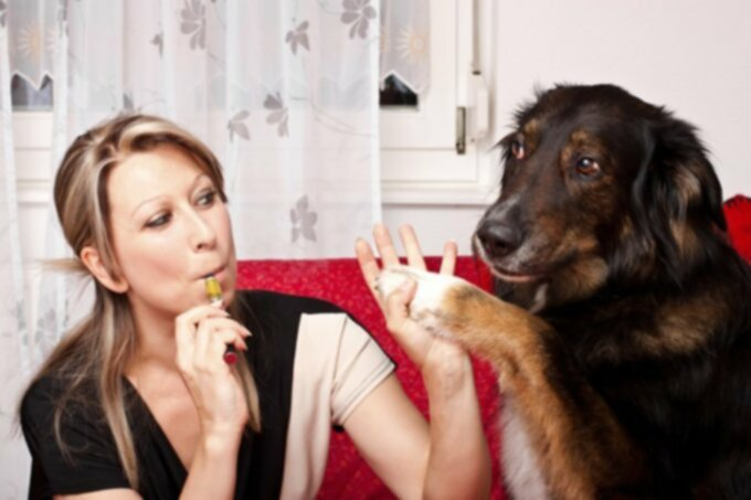Электронные сигареты токсичны для домашних животных