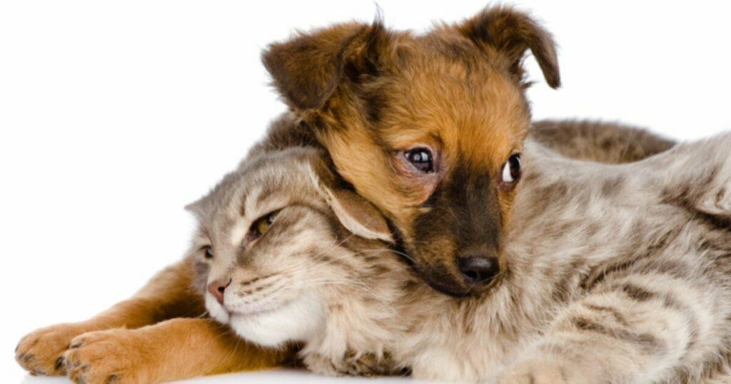 Думаете о том, чтобы вырастить приемлемую кошку или собаку?