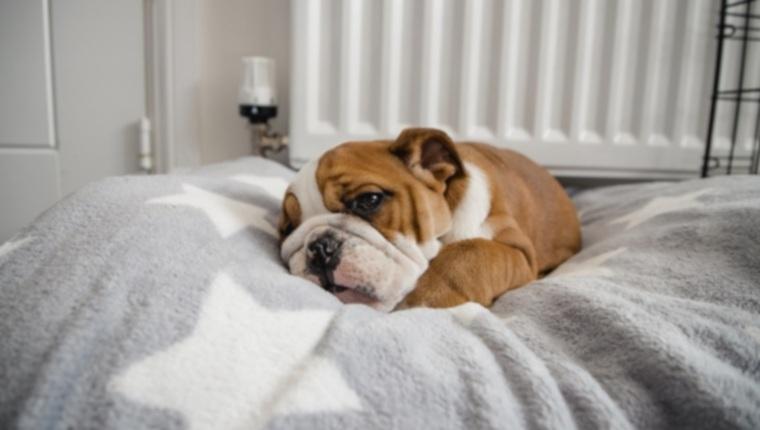 Депрессия у собак: симптомы, причины и методы лечения