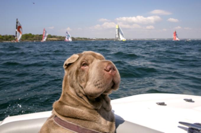 Безопасность домашних животных: пристегнитесь к Дню памяти
