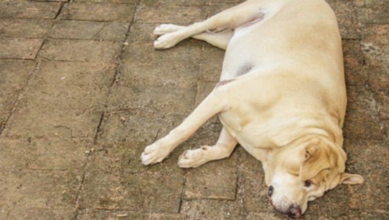 Несахарный диабет и сахарный диабет у собак: причины, симптомы и лечение