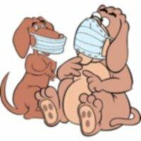 Собачий грипп: Собачий грипп