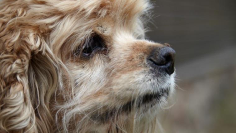 Болезнь сердечного червя у собак: симптомы, причины и методы лечения