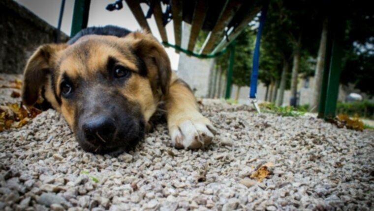 Дисплазия тазобедренного сустава у собак: симптомы, причины, лечение и профилактика