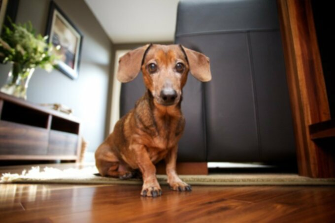 Недержание у собак: причины и профилактика