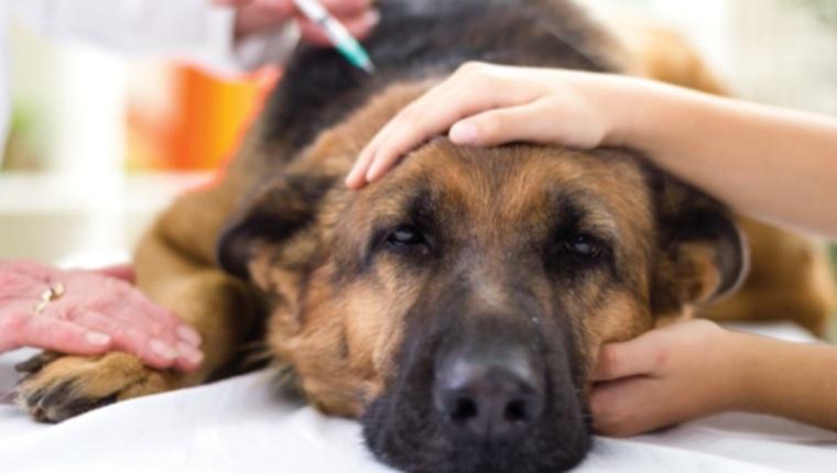 Бешенство у собак: симптомы, причины и профилактика