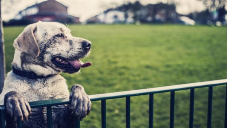 Бихевиористы говорят, что британские собаки впадают в депрессию из-за глобального потепления