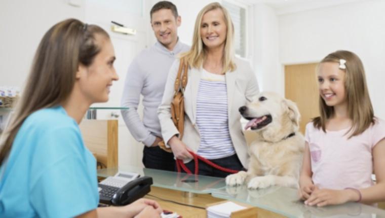 Куда обращаться, если вы не можете позволить себе ветеринарную помощь для своей собаки