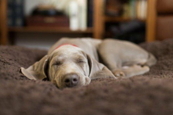 Собаки 101: Черви — причины, профилактика, лечение