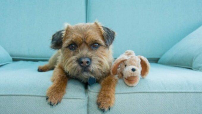 Месяц осведомленности о предотвращении отравления домашних животных: 10 лучших советов по профилактике отравления для собак