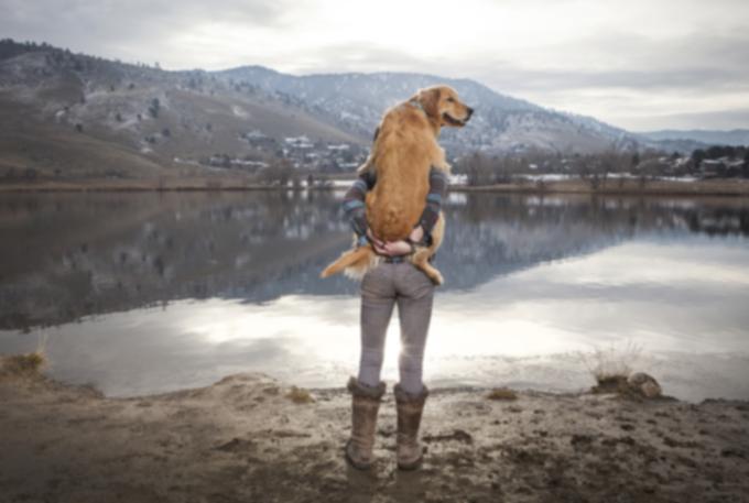 Как изменение климата влияет на здоровье вашей собаки