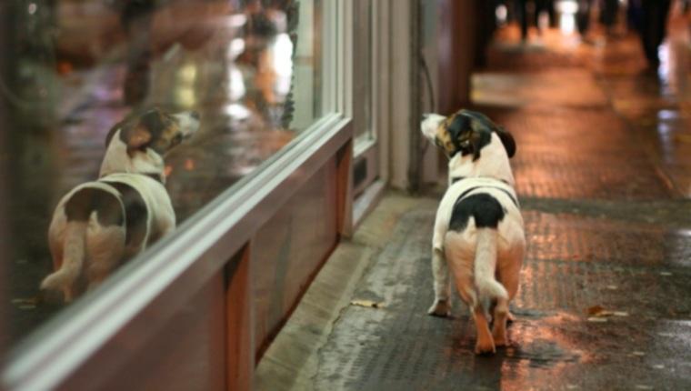 Побег собак: почему собаки пытаются убежать и как избавиться от этой привычки