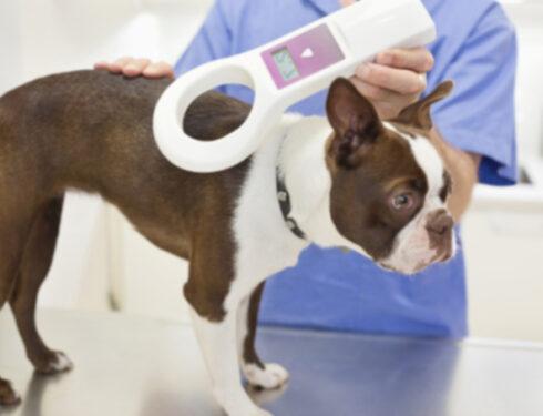 Микрочип вашей собаки: 5 важных фактов, о которых вы, возможно, не знали