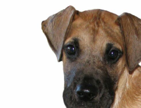 Выбор породистого щенка