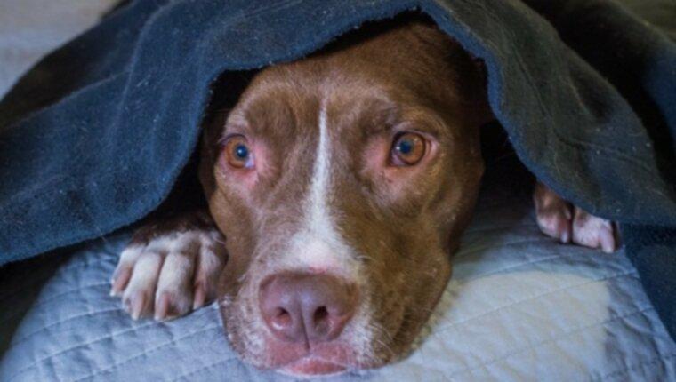 Шумовое беспокойство у собак: симптомы, причины и 5 способов лечения
