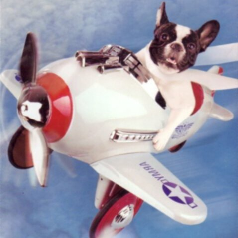 Полет с собаками