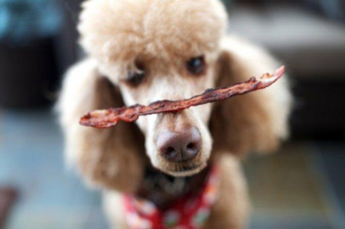 Новый рецепт лакомства для собак: угощение из южного бекона!