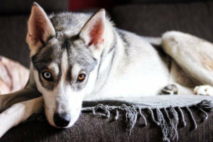 Пальто вашей собаки 101: здоровье, горячие точки, линька, проблемы