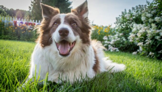 10 не очень секретных секретов счастливой собаки