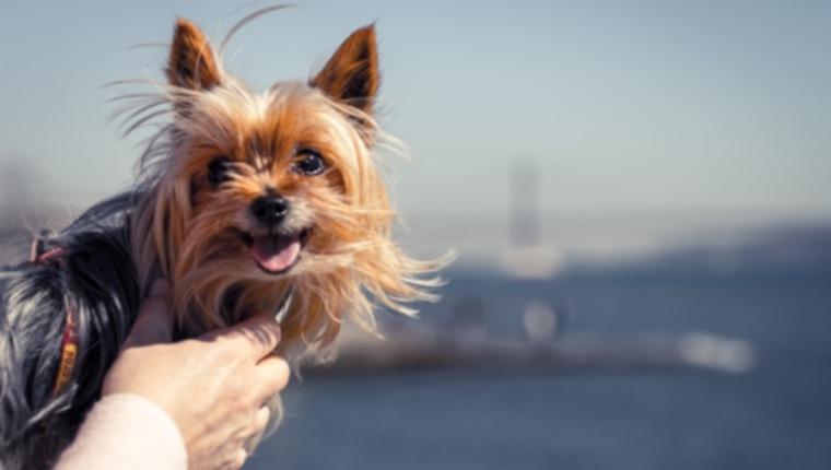 Топ-10 пород собак, которые живут действительно долго