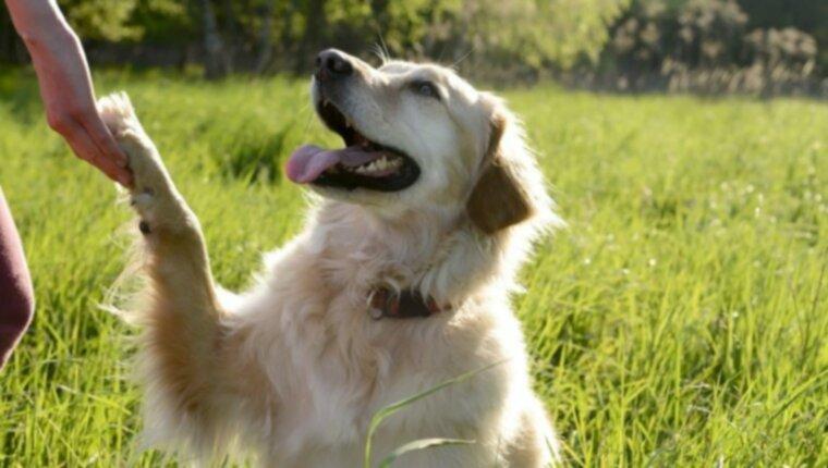8 советов по уходу за лапами вашей собаки