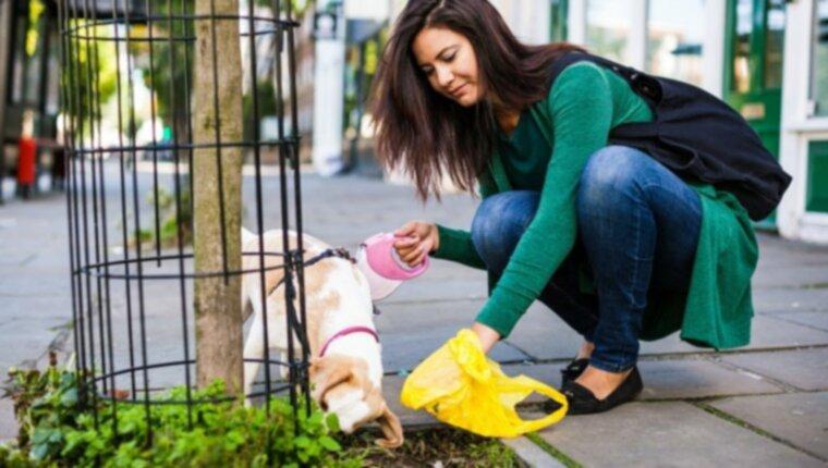 Нормальный, мягкий, жидкий и многое другое: что вам говорят какашки вашей собаки