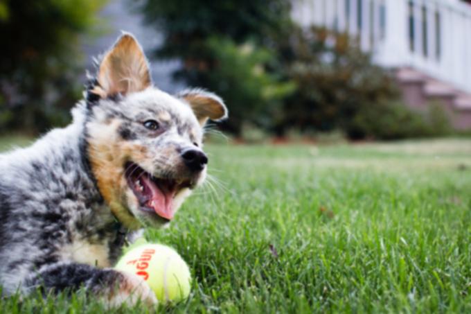 23 самых умных собаки в мире