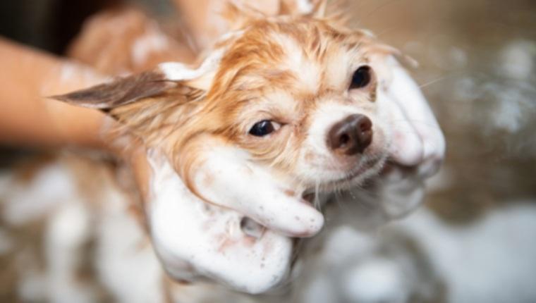 10 вещей, которые вы должны сделать для своих собак, потому что они не могут сделать это сами