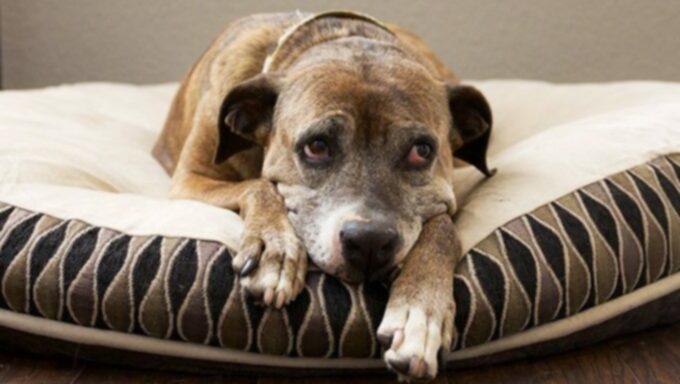 Ваша собака страдает сезонным аффективным расстройством?