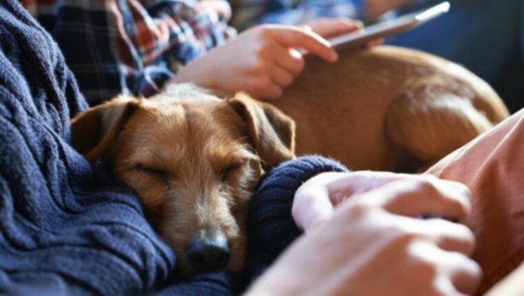 Спящие позы и привычки собак многое говорят об их характере и здоровье