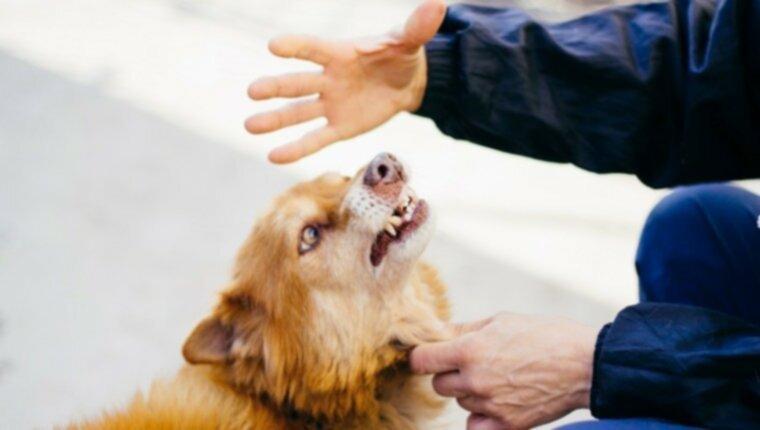 ИССЛЕДОВАНИЕ: Собакам не нравится, когда ты грубый и бесполезный
