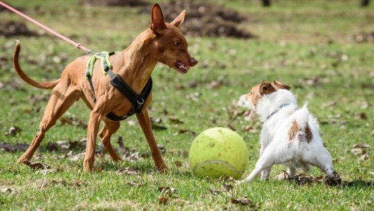11 вещей, которые делают родители собак, подвергая их щенков опасности