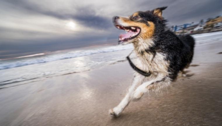 Какие упражнения нужны моей собаке?